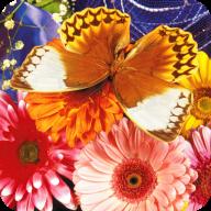 蝴蝶拼图 Butterfly Puzzle