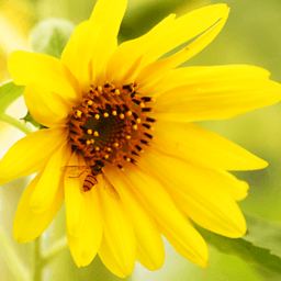 花卉拼图游戏