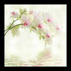 兰花花卉壁纸